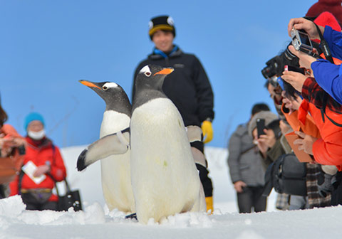 Penguin Snow Walk